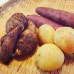 ジャガイモとサツマイモとサトイモ