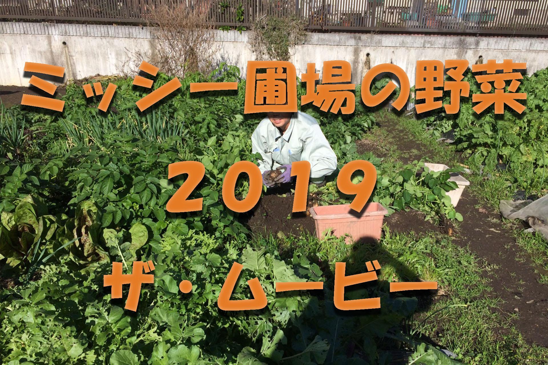 MVアイキャッチ画像_ミッシー圃場の野菜2019